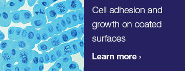 Cell adhesion and growth